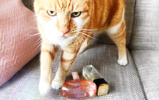Dierproefvrije Parfums